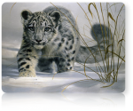 Νεα beta Snow Leopard ?