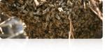Σαν ένα σμήνος από μέλισσες